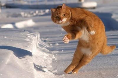 Hareketli kedi