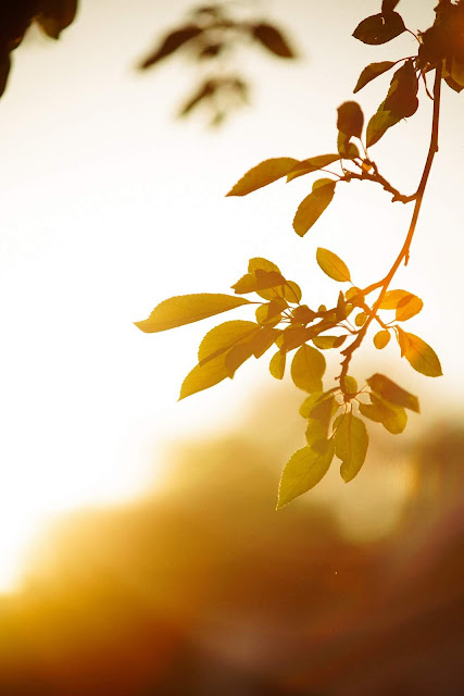 Branch in the Sunlight Photo by Brandon Green via Unsplash