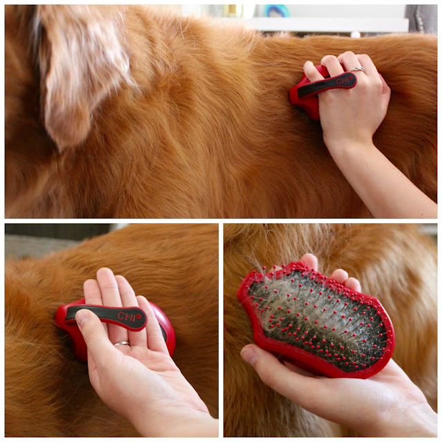 Keeping your dogs coat tangle-free and shiny with CHI for Dogs soft grip pin brush