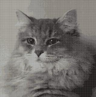 gatto siberiano punto croce