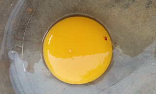 bright yellow egg yolk