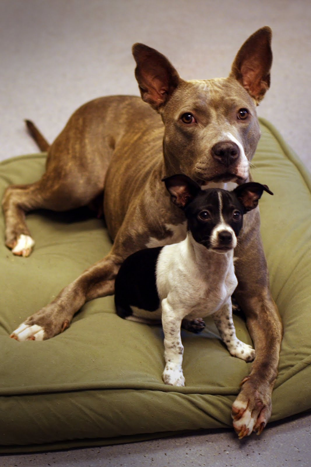 Rebound Hounds: Sweet Mabel Gets A New Leash On Life