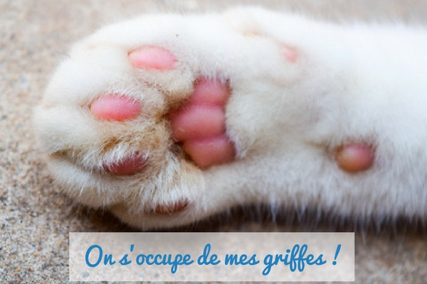 Dogteur comment soigner les griffes de son chat - Comment couper les griffes de son chat ...