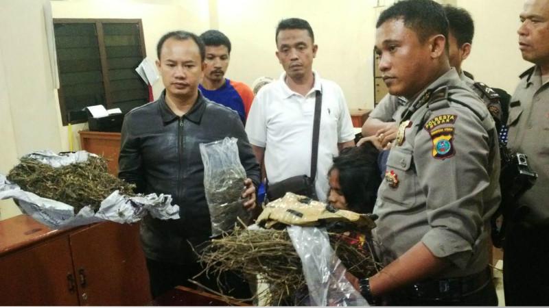 Maruntung Manalu diamankan di Polsek Medan Kota beserta barang bukti ganja