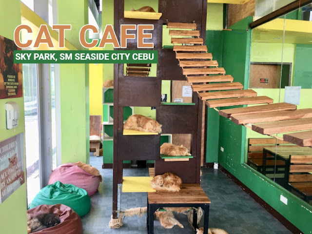 Cat Cafe Sky Park SM Seaside City Cebu