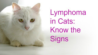"A white cat graphic that says, ""Lymphoma in Cats: Know the Signs."""
