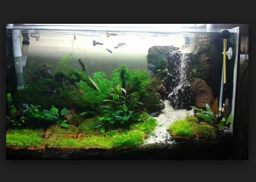 Tips Mudah Cara Membuat Aquascape pada Aquarium yang Murah untuk Pemula