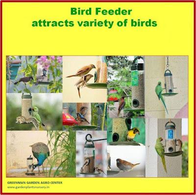 bird feeder ahmedabad