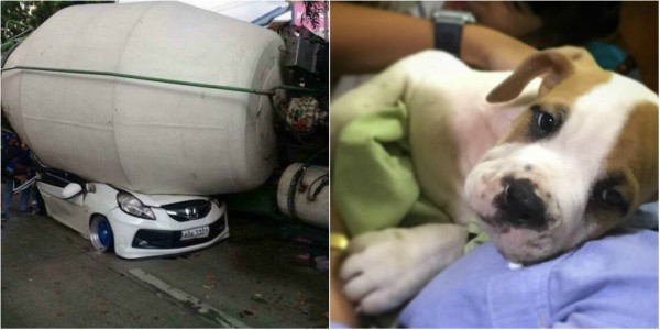 Puppy found in cement mixer collision site was father's surprise gift to kids