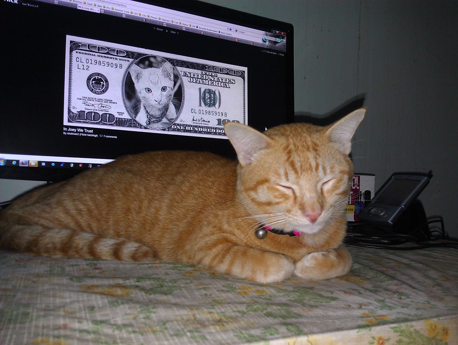 LEMME GIT DIS STRAIGHT. U PUT MAH FACE ON $100 BILL, HAD ME FIXD AN TRIMMD MAH CLAWS. AN NAO U WANTS ME 2 SMILE 4 U? HOOMAN, I DOAN FINKZ SO! by stratman² (2 many pix!) from flickr (CC-NC-ND)
