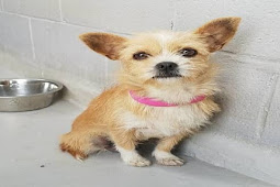 I had a family and was loved just for a while - frightened pup brought to the shelter to die
