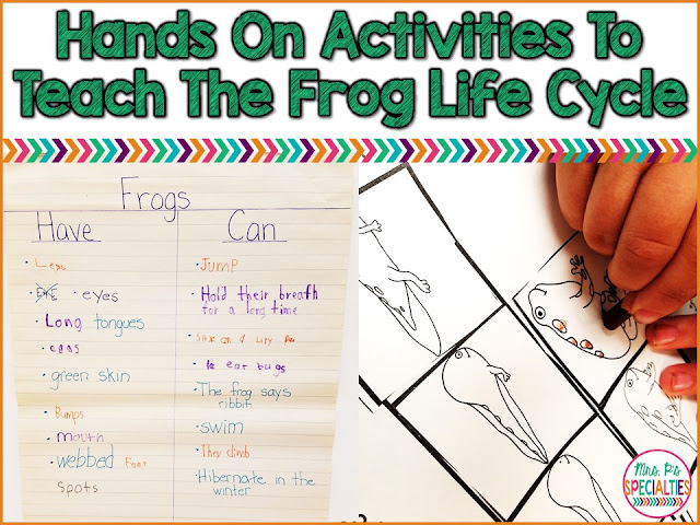 Help students with disabilities understand the frog life cycle through hands on and engaging activities. These ideas are ideal for students in special education, life skills programs, self-contained classes and with autism.