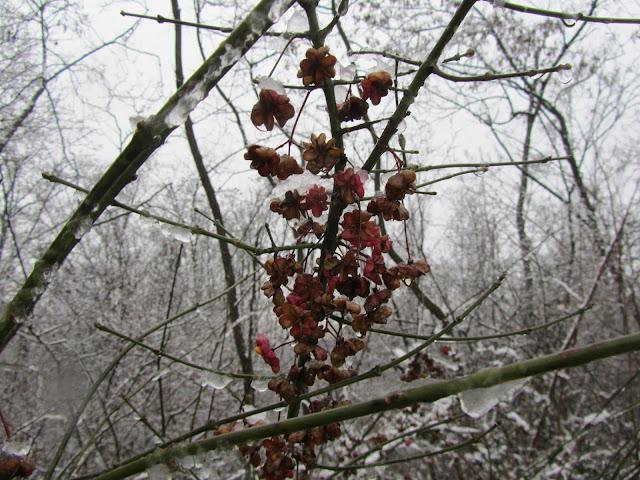 Berretta del Prete in Inverno