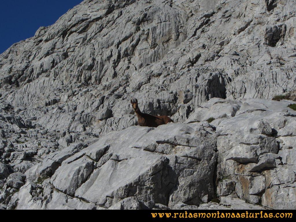 Ruta el Cable, Padiorna, Collado Jermoso, Palanca, Fuente De: Rebeco