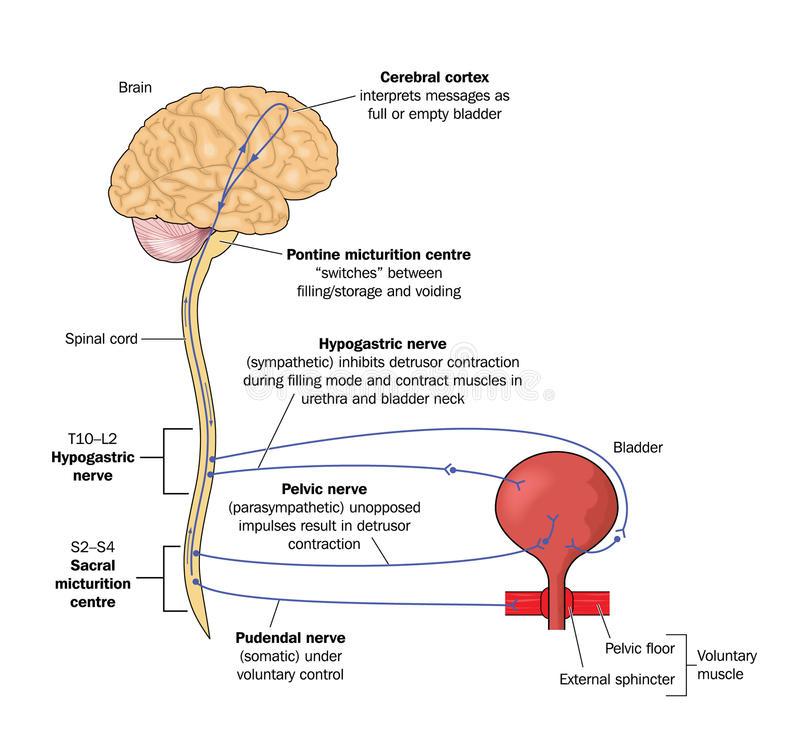 Em Didactic Acute Urinary Retention
