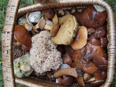 """grzyby 2017, grzyby na Mazurach, zlot grupy """"Grzyby, grzybiarze, grzybobranie"""""""