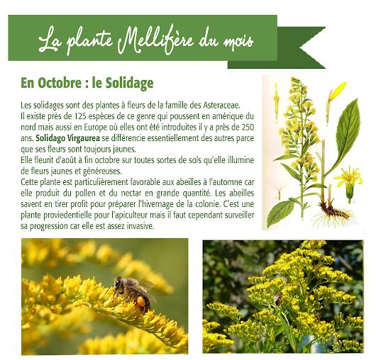 Naturapi tout pour l 39 apiculteur google for Plante 6 mois