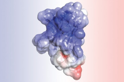Molecule structure responsible for alzheimer's