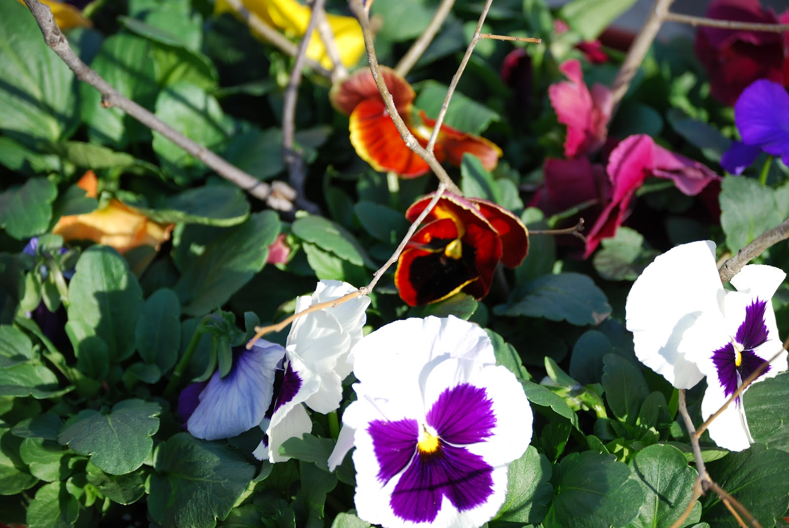 When can annuals be planted-8669