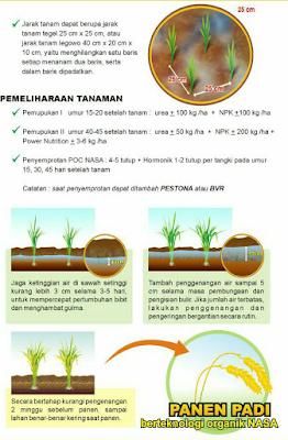 Apilikasi Pupuk Nasa Power Nutrition untuk Padi