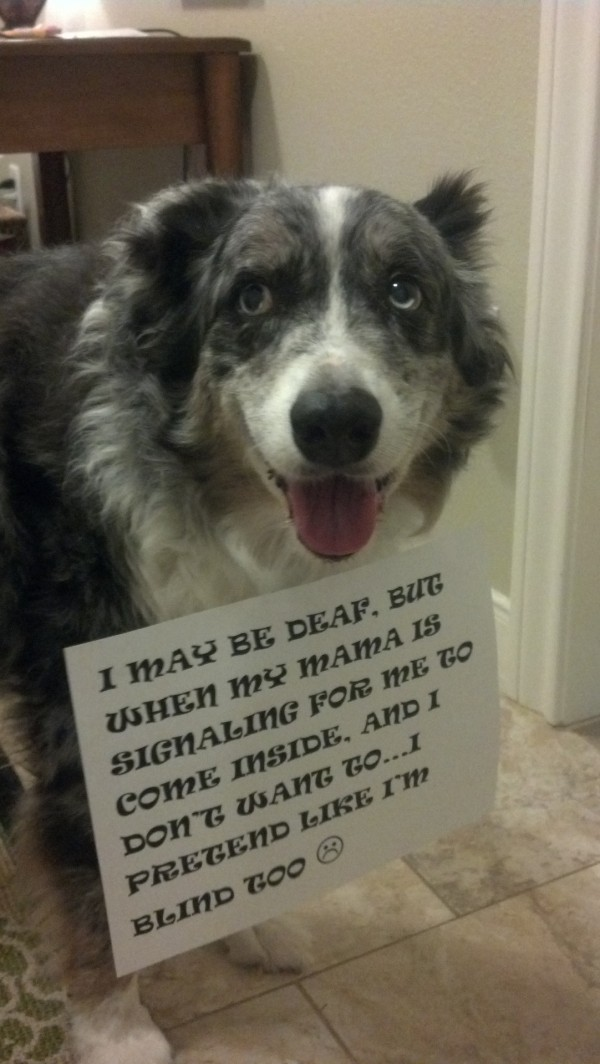 Funny Dogs That Look Ashamed | La Oddee
