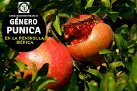 El género Punica  son arboles caducifolio con hojas opuestas, sencillas y sin estípulas. Flores hermafroditas
