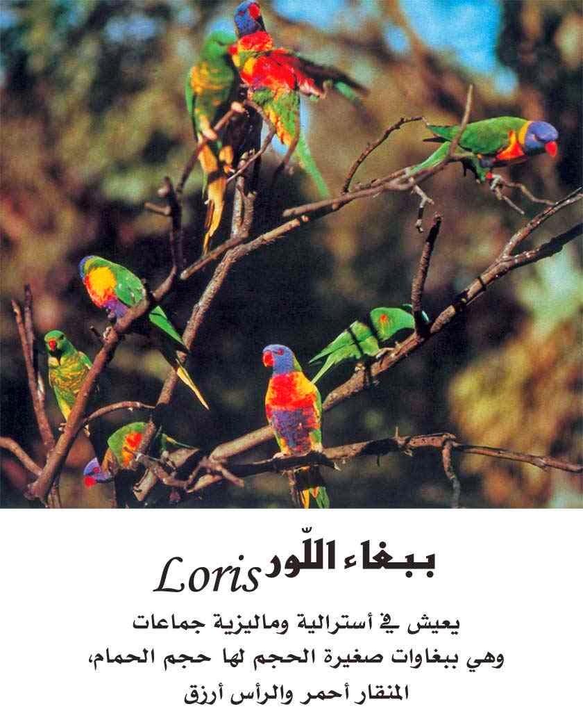 اشهر انوع الببغاوات بالصور ومعلومات عنها Parrots