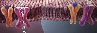 قد يسبب الإصابة بمرض السكري… جديد فيروس كورونا (كوفيد ١٩)