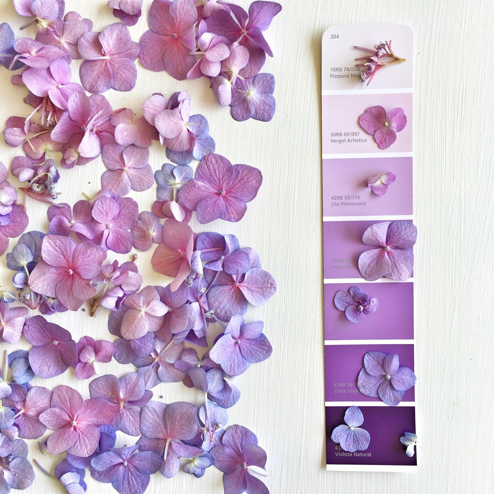 El violeta en la decoración