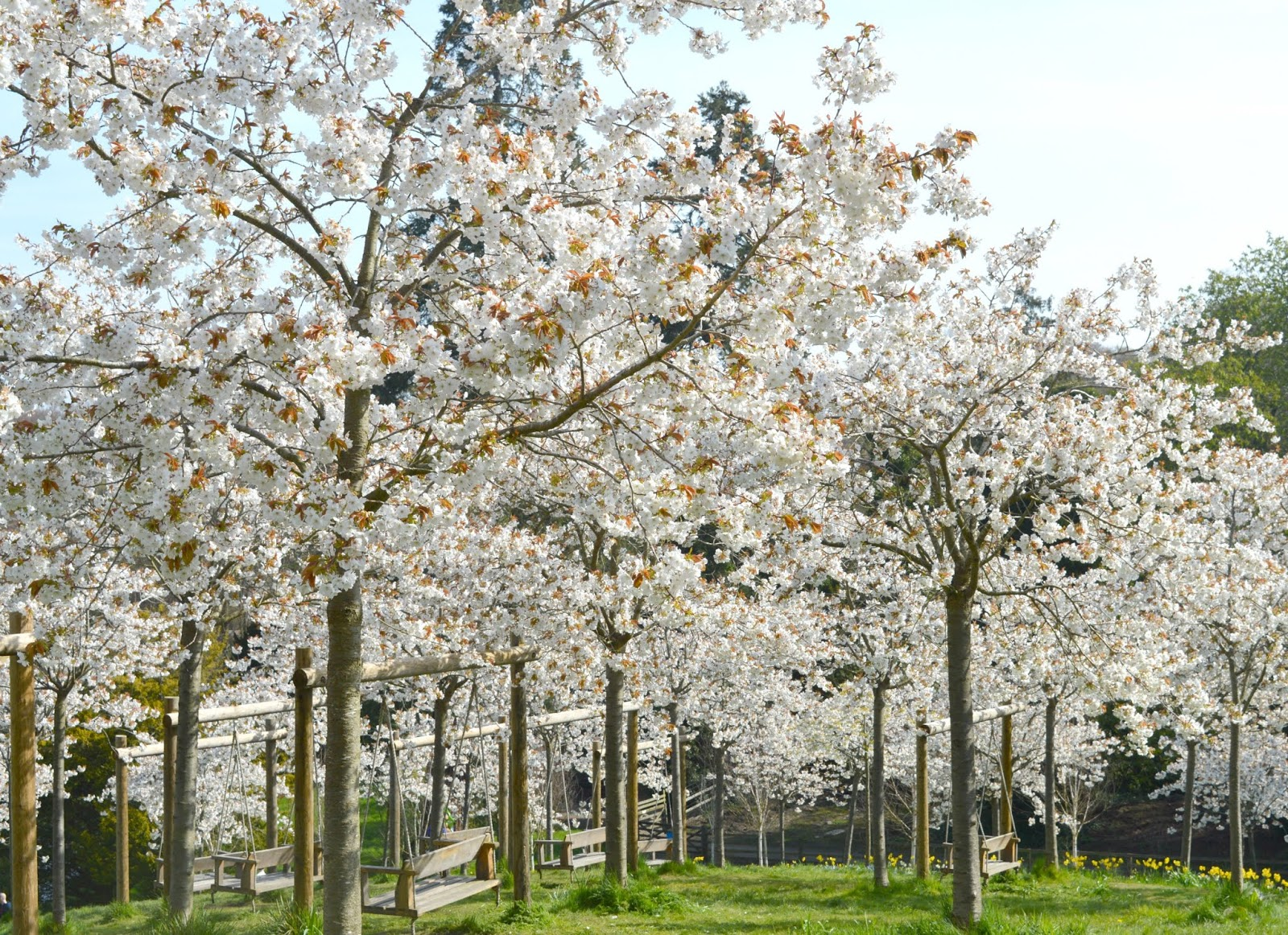 Blossom Orchard Alnwick Garden