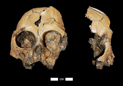 Research explains survival of last Miocene hominoids in China