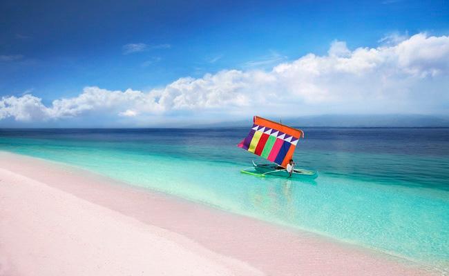 Xvlor.com Great Santa Cruz Island is pink beach of Tubipora musica