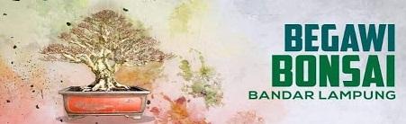 Kontes Bonsai Lampung