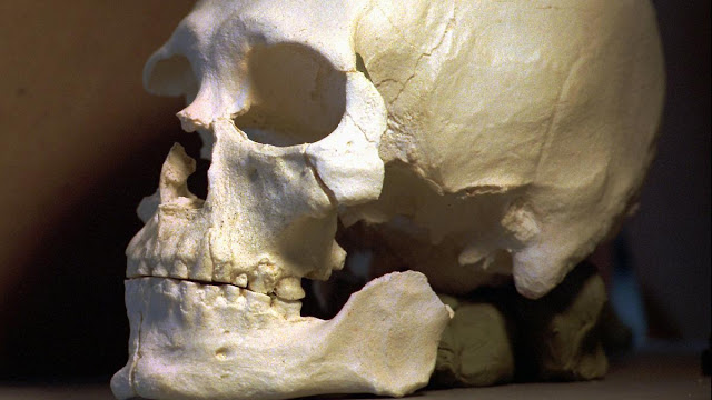 Kennewick Man to return to Native Americans for reburial