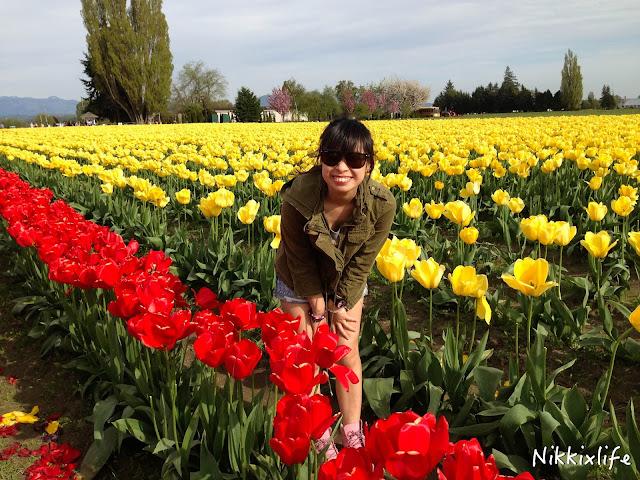 【西雅圖。生活】滿地整個校園的的櫻花樹及四月限定的鬱金香園 5