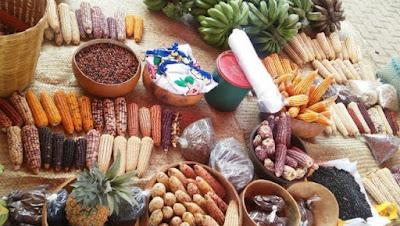 fiesta del maíz en Argentina