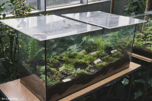 rośliny owadożerne w akwarium