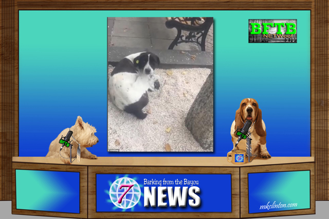Dogs announcing the world animal news