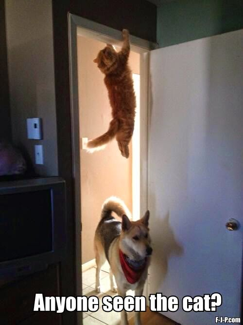 Funny Dog Chasing Cat Hiding Meme - Anyone seen the cat?