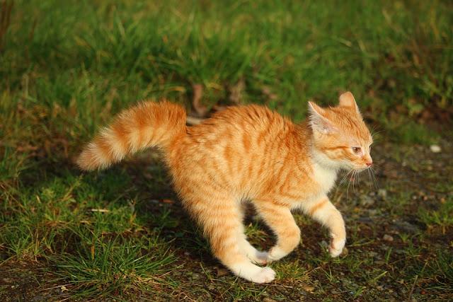 Hyperactive Kitten
