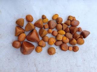 কোলেষ্টারিনাম ( Cholesterinum )