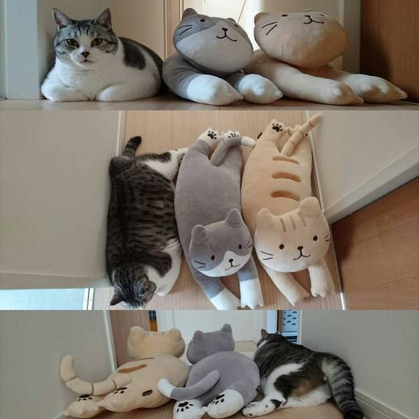 Funny cats - part 302, best cat pictures, funny cat image, cat photo