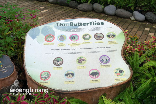 butterfly park hesperiidae scientia square park tangerang