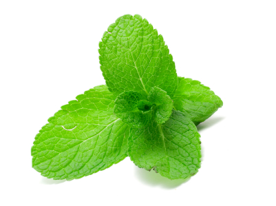 Because of its menthol, mint has a very good action over the digestive ...