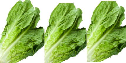 Lettuce meaning in hindi, Spanish, tamil, telugu, malayalam, urdu, kannada name, gujarati, in marathi, indian name, marathi, tamil, english, other names called as, translation
