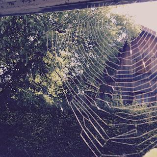 Spinnennnetz im Sonnenlicht