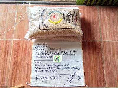 Benih Padi Pesanan    ABU SOFYAN Lampung Timur, Lampung    Benih Sebelum di Packing.