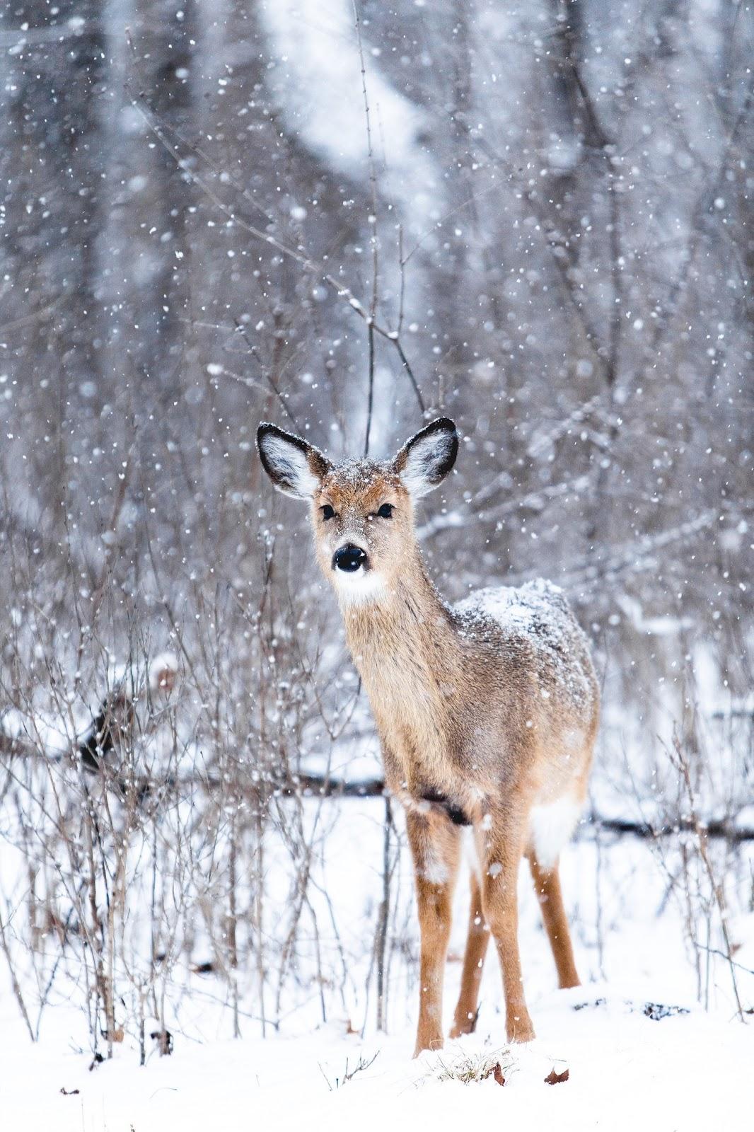 Beautiful Winter - Verdigris Vie