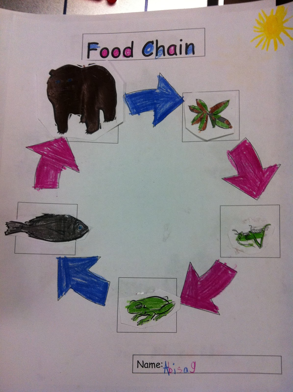 Great White Shark Food Chain Diagram Kenwood Stereo Wiring Harness Elephant