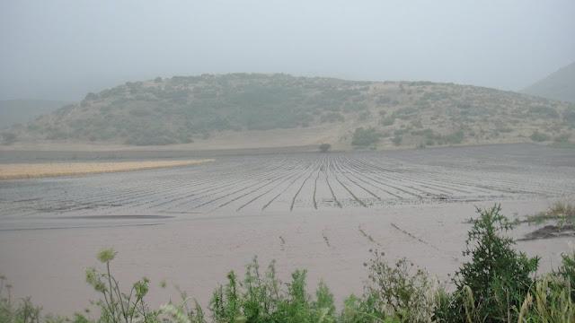Αποζημιώσεις από τον ΕΛΓΑ και σε ζημίες που προκάλεσαν οι έντονες και συνεχείς βροχοπτώσεις ζητά ο ΣΑΣΟΕΕ